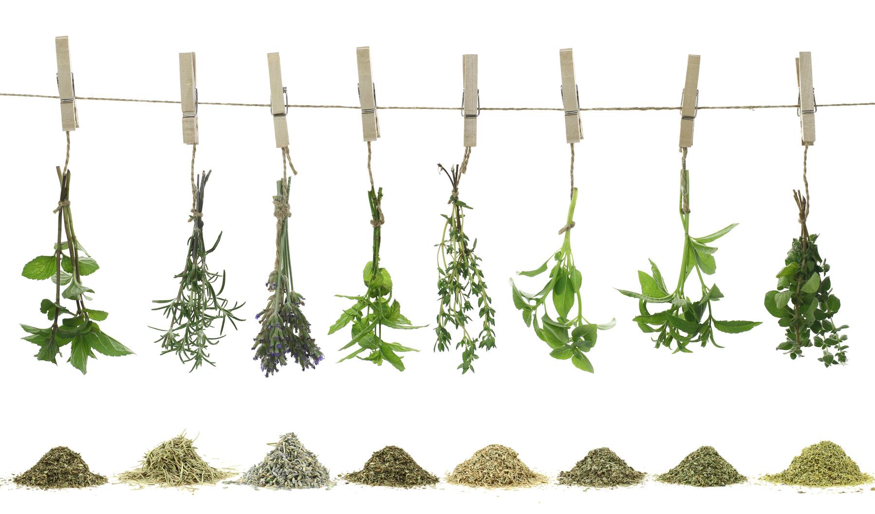 secher - herbes aromatiques